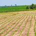 Proteção de cultivares passa a ser cem por cento automatizada