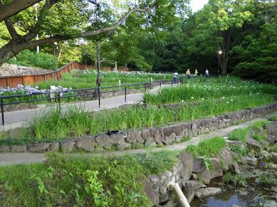 山田池公園・花しょうぶ園