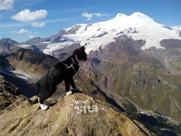 кот Граф поднялся на гору Эльбрус