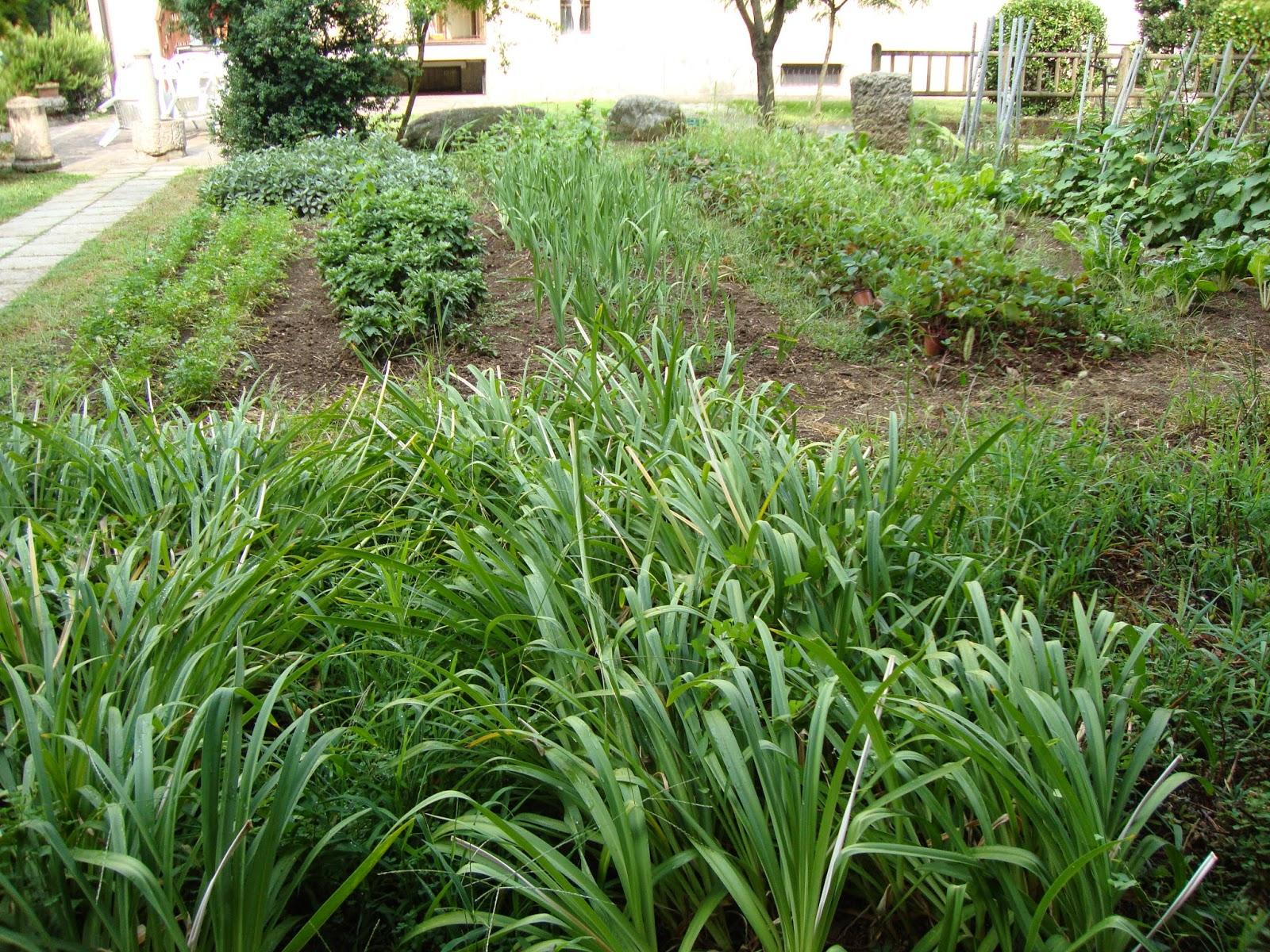 Un piccolo giardino in citt l 39 orto giardino del parroco - Comporre un giardino ...