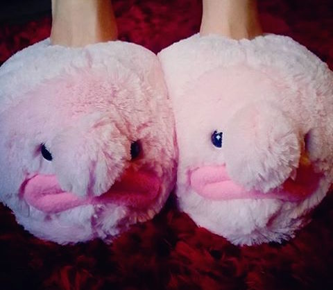 Blobfish slippers - Most comfortable bedroom slippers ...