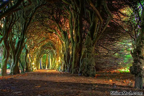 Gormanston Fairytale Tree Tunnel, County Meath, Ireland