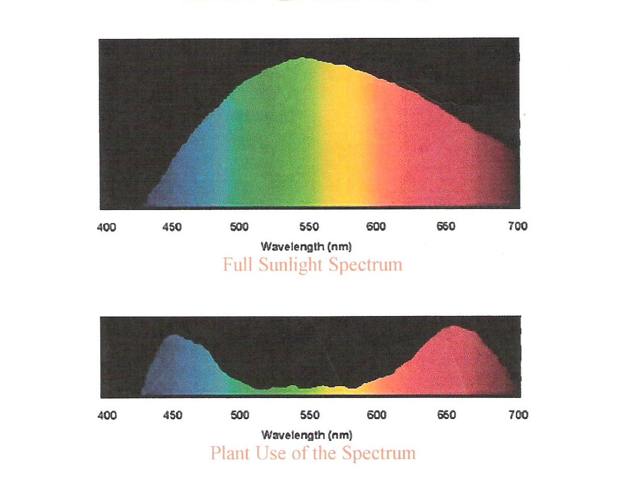 hight resolution of most grow lights are either full spectrum or daylight with a broad spectrum range like real sunlight other lights have more blue frequencies cool