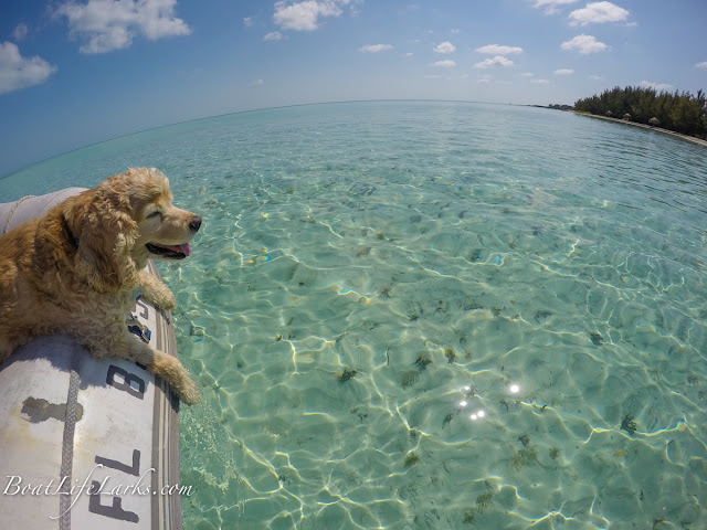 Boat dog enjoys the clear Bahamas water