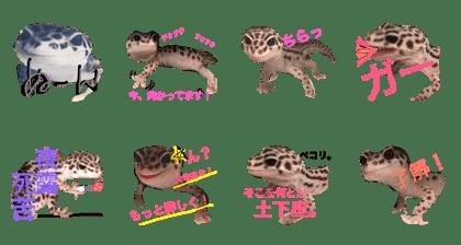 kohirosutannpu 3