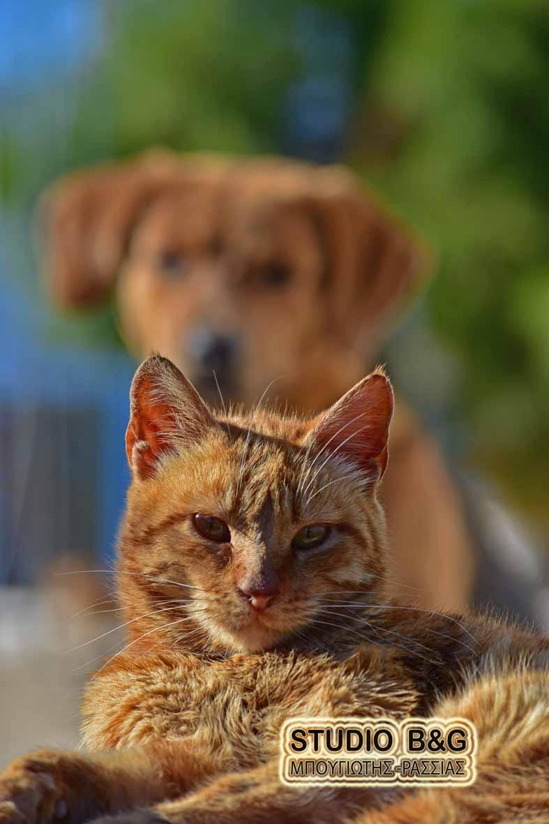 dfe1b9e3e590 Η φωτογραφία της ημέρας  Είναι ο σκύλος και η γάτα εχθροί ...