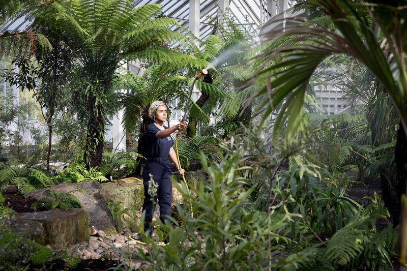 horticultora regando plantas en un invernadero de cristal
