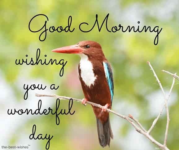 good morning with birds image