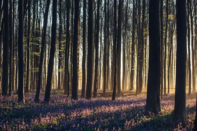 Hutan Negeri Dongeng
