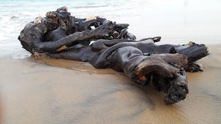 Piece of lifeless wood at sea bank