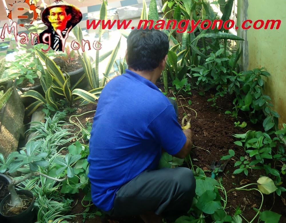 Belajar Membuat Taman Sendiri Blog Mang Yono