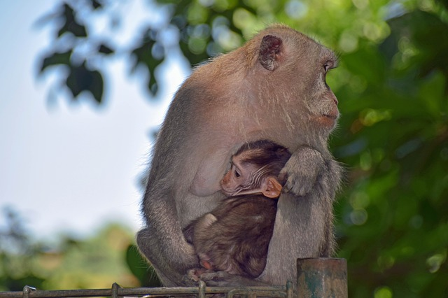 Ubud Holy Monkey Forest - Ubud, Monkey Forest, Bali, Holidays, Tours, Attractions