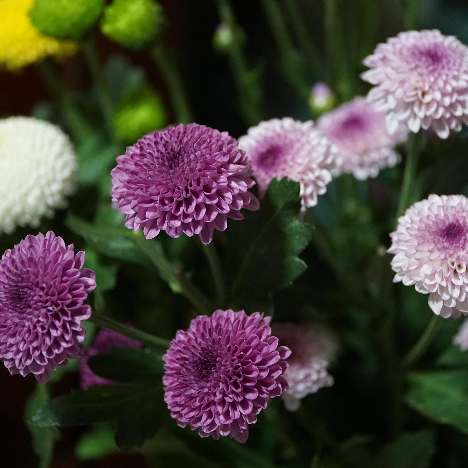 幾つかの紫とピンクの小さな花