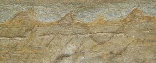 άνθρακα που χρονολογείται απολιθωμένο ξύλο