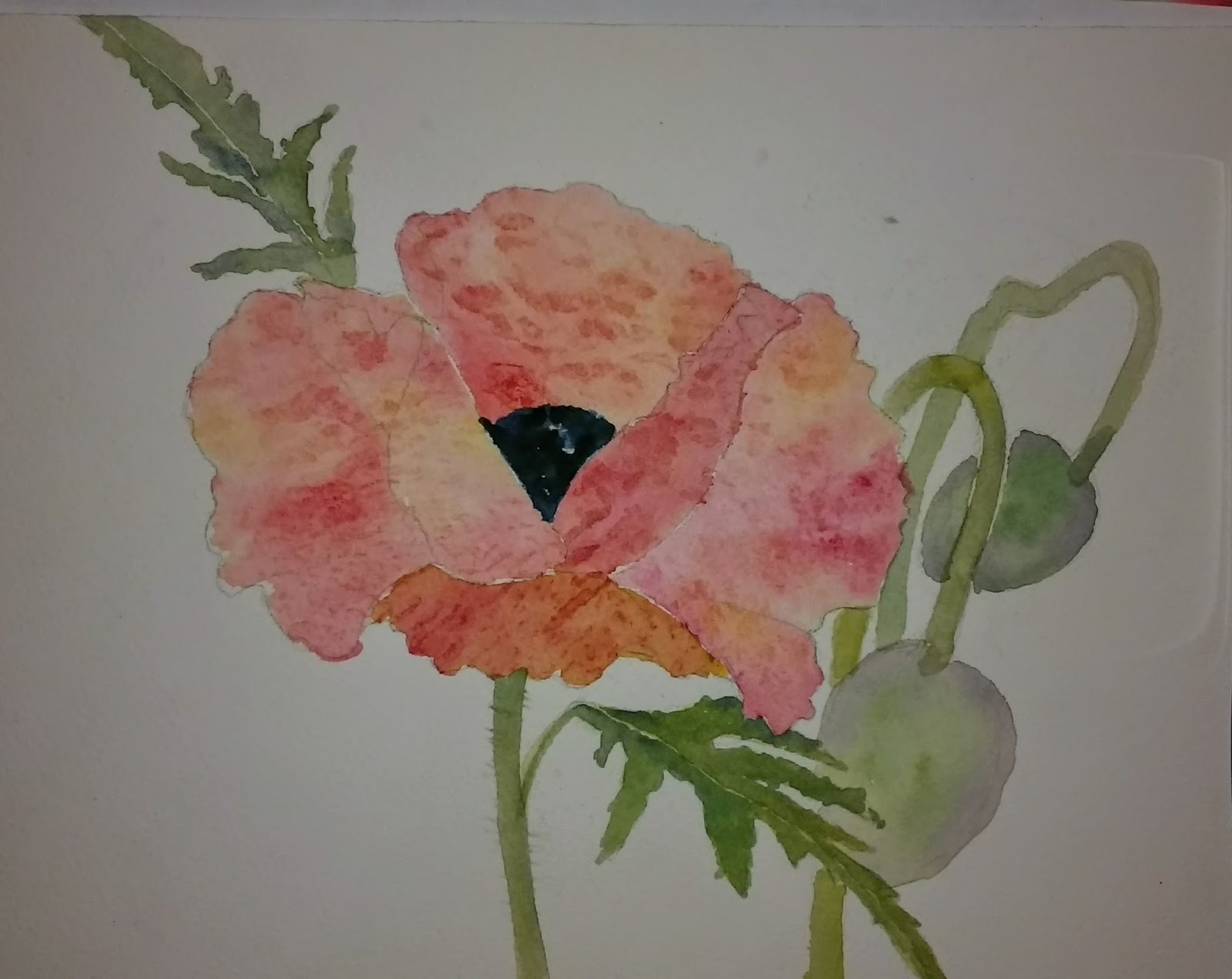 Chris Campbell Watercolors Poppy On Arches Board