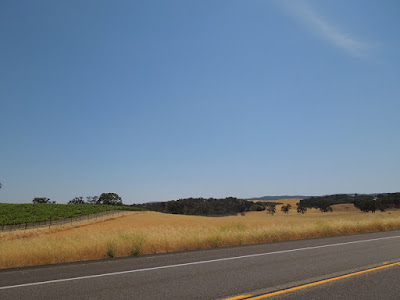 Field, Oaks, Vineyard, on Hwy 46 W, Paso Robles, © B. Radisavljevic