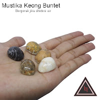 Jual Keong buntet magic