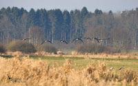 Geflügelpest bei Wildvogel in Mühlenbarbek nachgewiesen