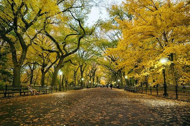 autumn-colors-4