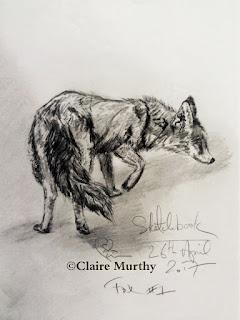 nature blog : fox in the garden sketch