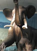 Museo Provincial:El Mastodonte