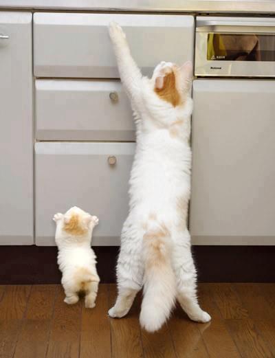 Gatitos Madre e hijo
