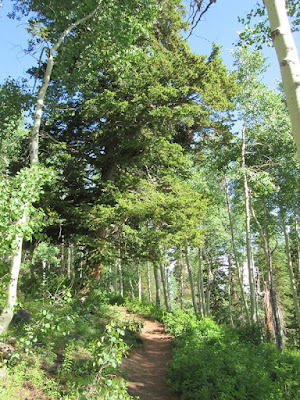 mountain trail hike Big Cottonwood Canyon Utah nature