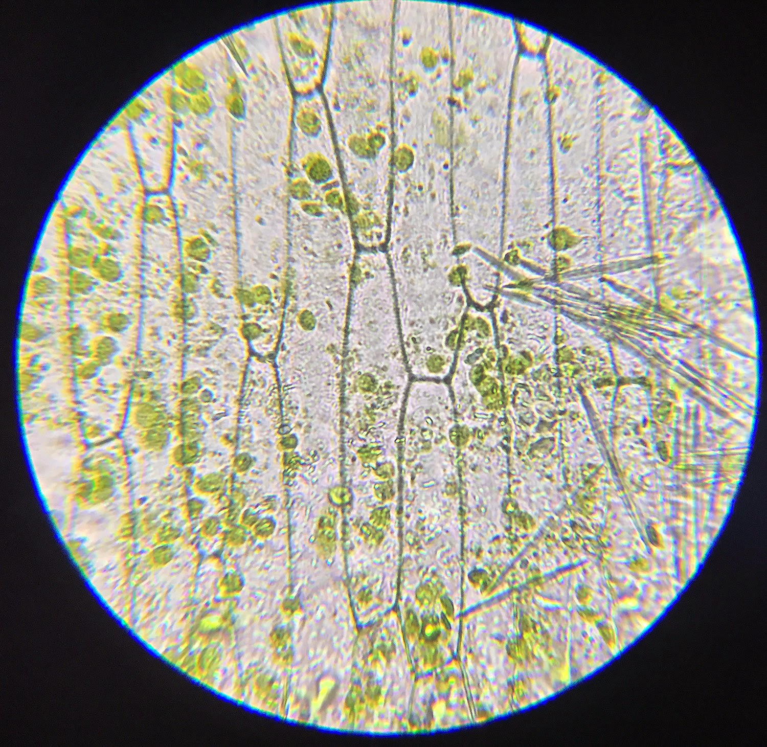 A school of fish: Plant and Animal Cells through the ...