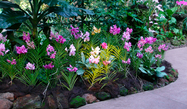 Tropical Garden And Landscape Professionally Designed Indoor And