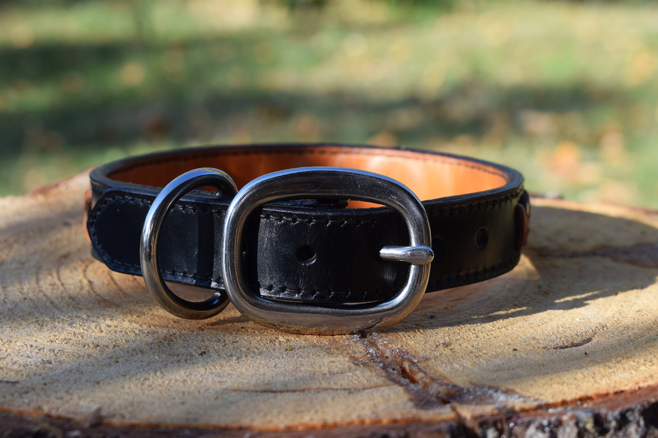 Dog Collar Tan With Studs With Night Reflection
