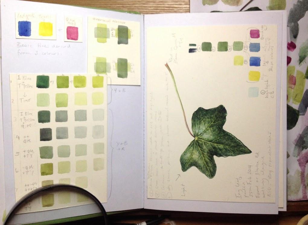 Ivy leaf study