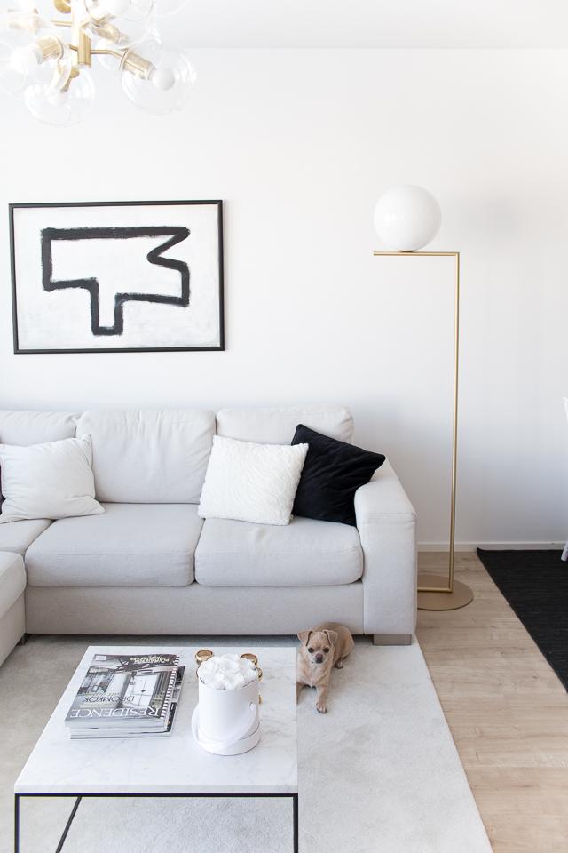 chihuahua, olohuone, sohvapöydällä