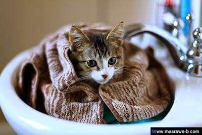 صور صور قطط كيوت 2020 خلفيات قطط جميلة جدا cats9.png