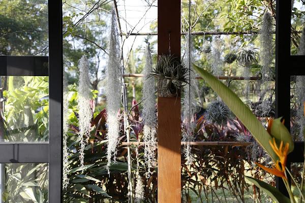 都蘭小花園2