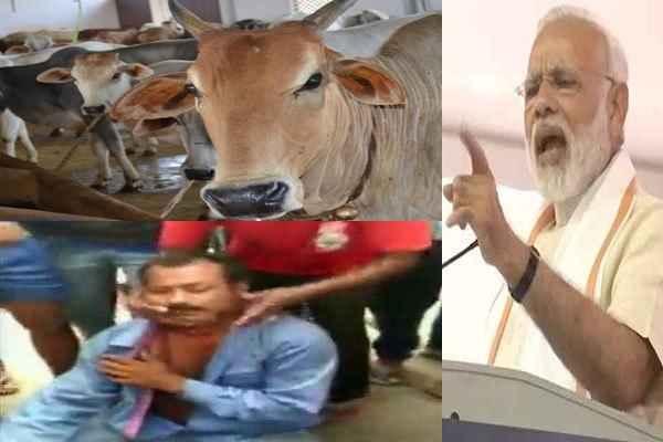 pm-modi-said-gaurakshak-will-be-punished-who-beat-gau-taskar