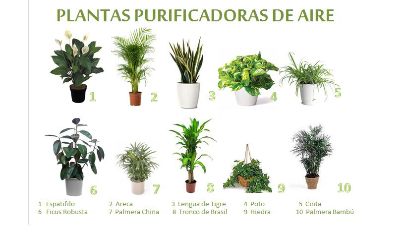 Una Casa Sana Plantas Purificadoras De Aire - Nombres-de-plantas-de-exterior