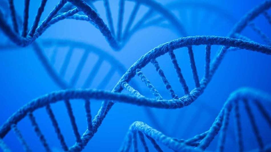 Bilimsel, İnsan atası, İnsan ataları, Evrim, Evrim süreci, Neandertal, A, Melez insan türü, Yeni insan atası, Arkeolojik keşif, Eski insan türleri, Antik atalarımız,