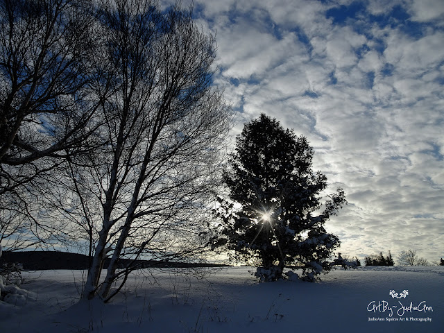 Winter trees photo