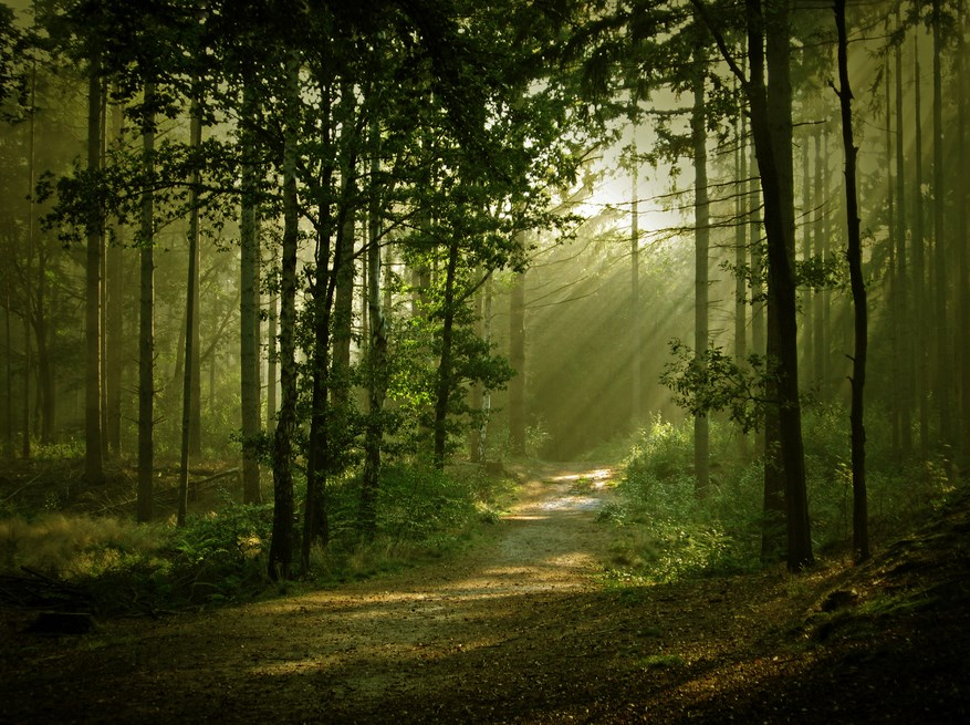 Fotografi Foto Landscape dengan Hutan Yang Luar Biasa Cahaya dan Backligth Indah ROL