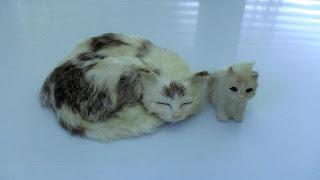 تفسير حلم القطط الصغيرة بالتفصيل