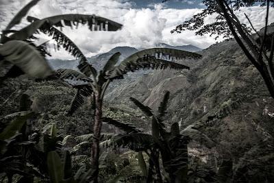 Vegetación de la cordillera de los Andes, Colombia