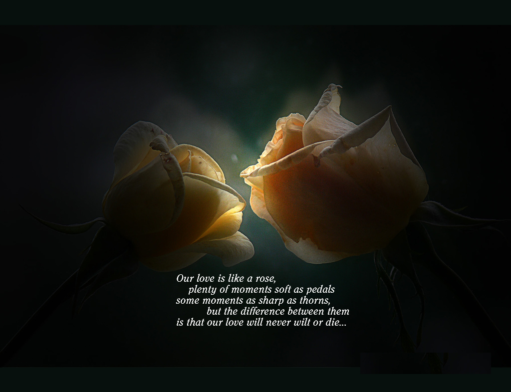 Sweet Love Quotes Wallpapers