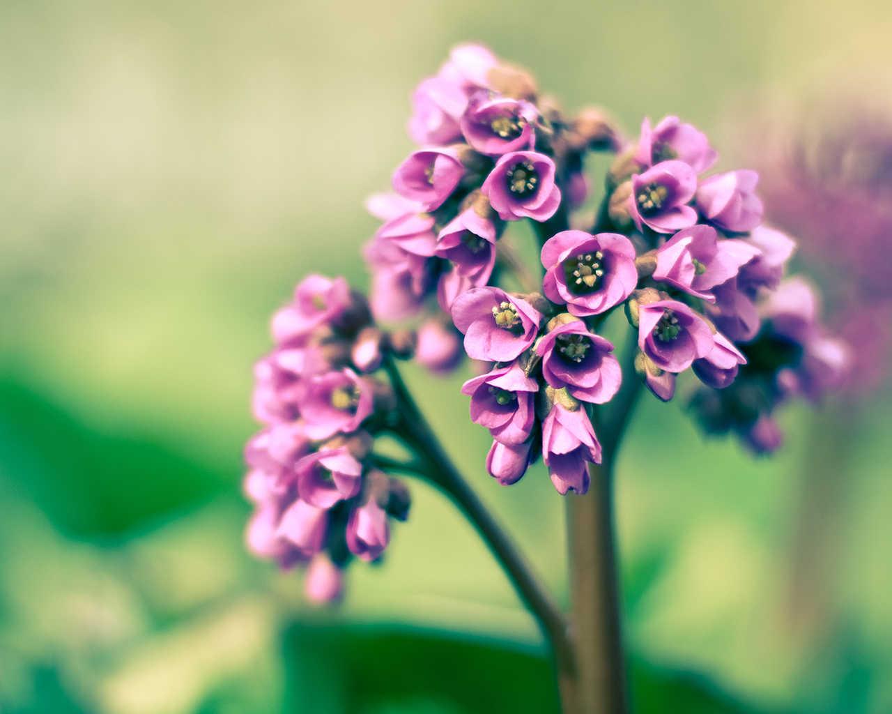 Zoom Diseno Y Fotografia Imagenes De Flores Primavera Wallpapers