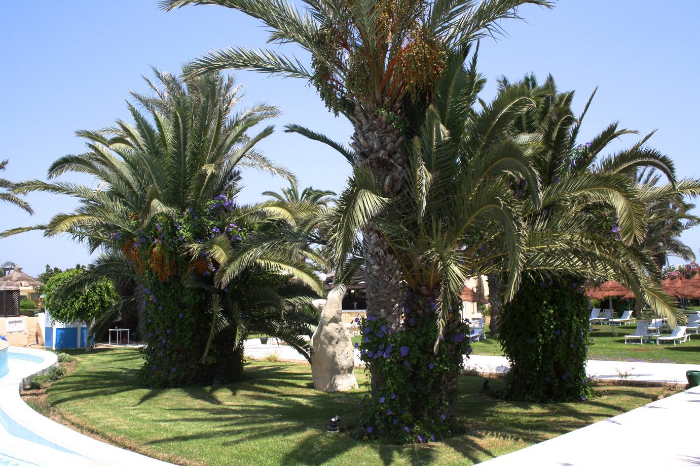 TUNISIA: PHOTO DIARY I. 9