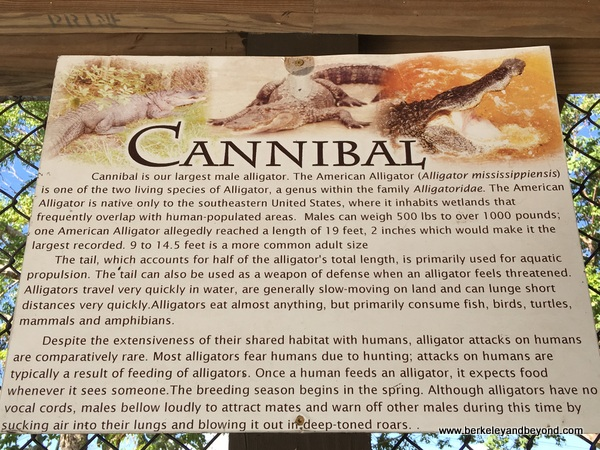 sign description of Cannibal the alligator in zoo at Sawgrass Recreation Park in Weston, Florida
