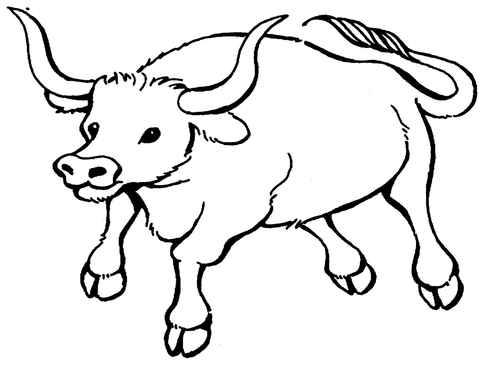 Ox Coloring Pages Kidsuki