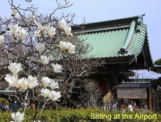 Travel Tokío , resumen en unas cuantas fotos de mi viaje a Japón .