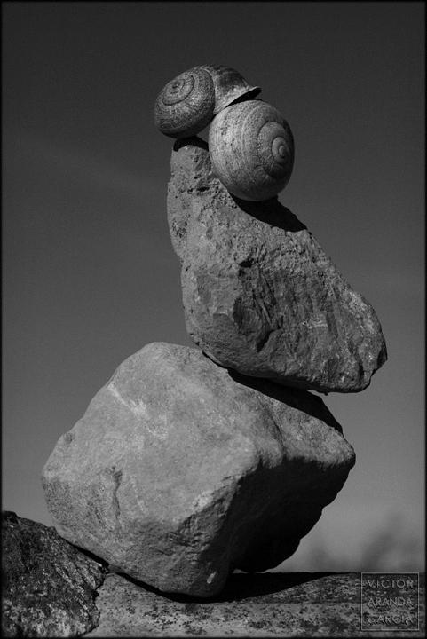 fotografía, Límites, serie, arte, caracoles, piedras, Fuente Álamo