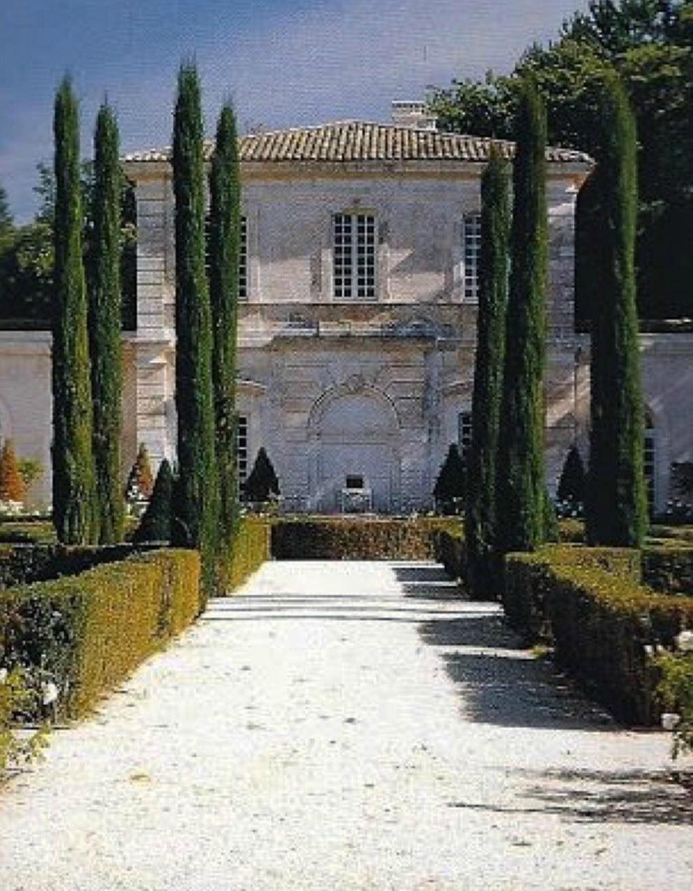 Cipreses en la Provenza (Francia)