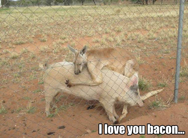 30 Funny animal captions - part 48, animal pictures with captions, best funny captions
